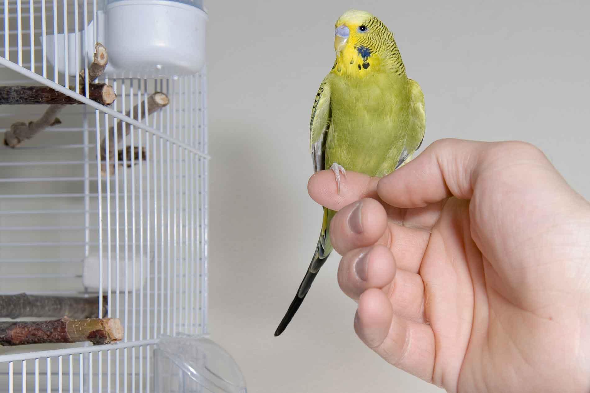 Как сделать попугая своими руками инструкция с фото