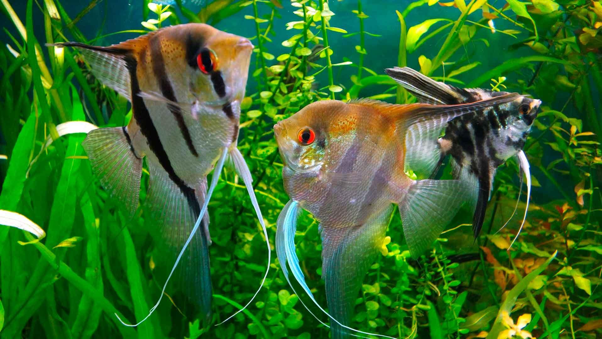 фото глаз рыбы