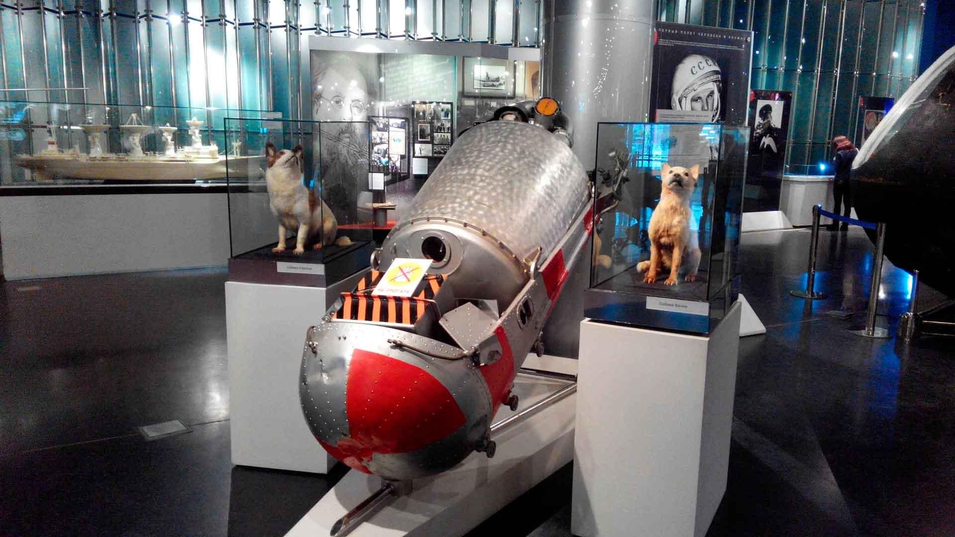 Собаки Белка и Стрелка в космосе