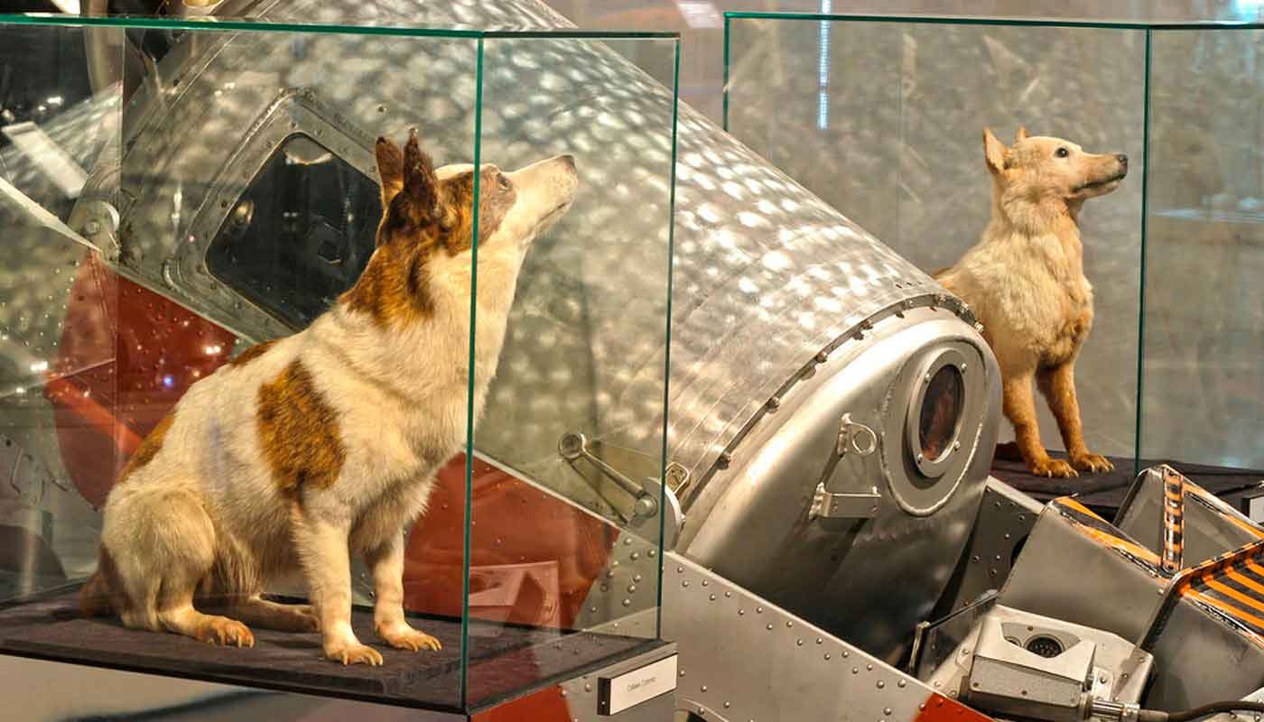 Собаки Белка и Стрелка фото