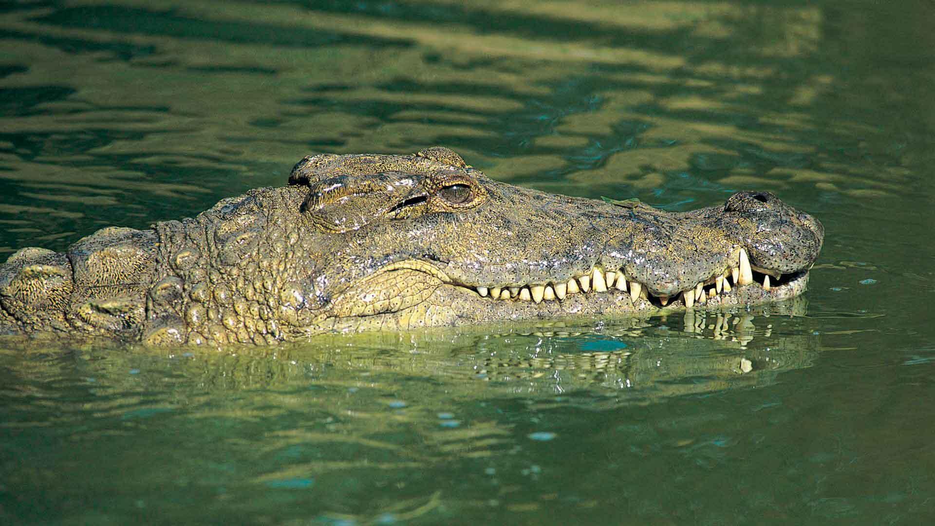 Вподвале одного издомов Петербурга обнаружили крокодила