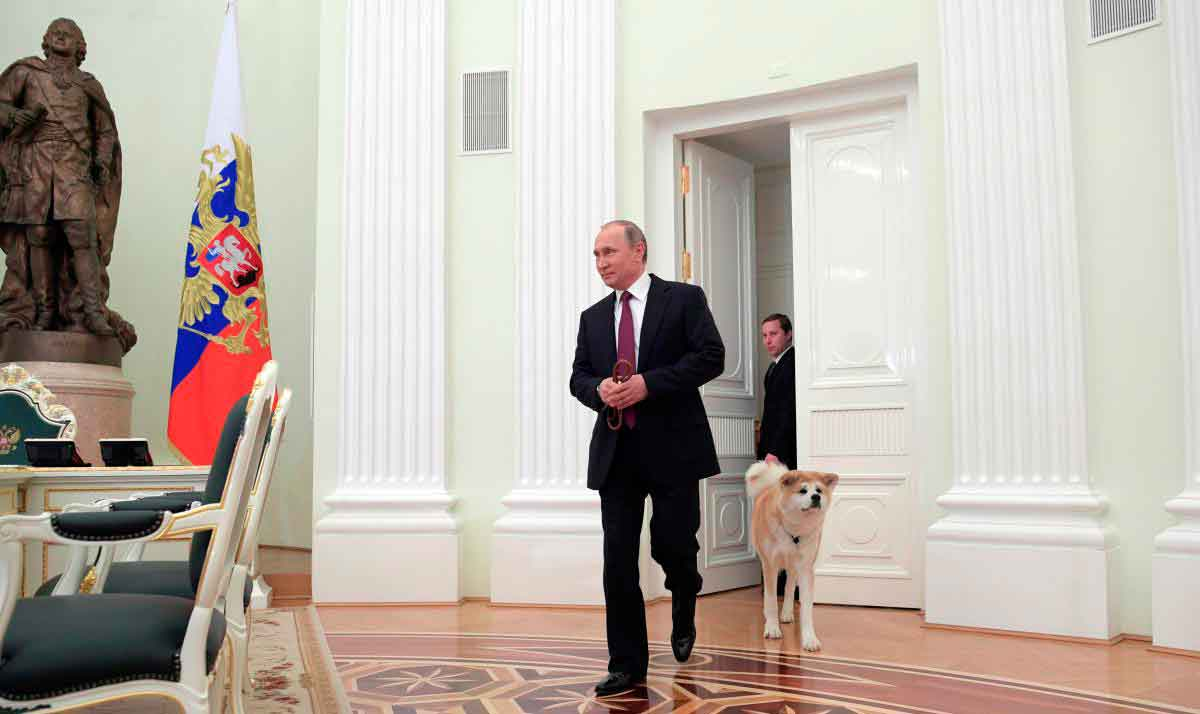 Собака Путина акита-ину